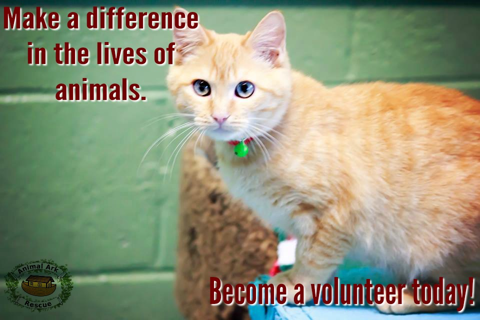 cat make a difference