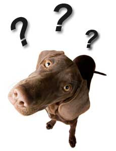 frequenty-asked-canine-fitness-questions